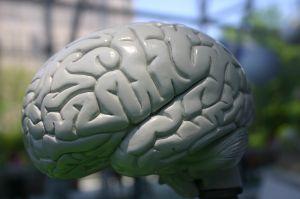 brains-373760-m